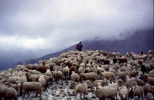 1994, Marcel Bellieud aux assalès de l'Estrop après un orage de grésil (Péone)