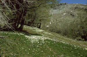 le col de la Boucharde, 2001