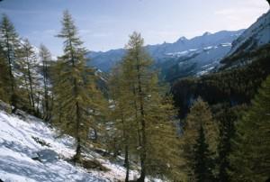 la Cayolle sous la neige, 1983