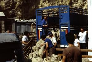 Guillaumes la foire aux tardons, 1982