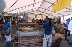 Roure, foire aux béliers, 2005