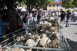 Foire aux agnelles et aux béliers de Thoard (04), 2014