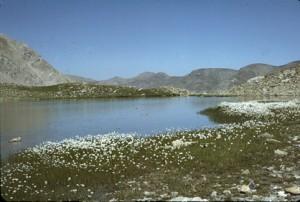 le lac des Linaigrettes (2494m), 1984