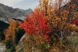 le vallon du Tuébi l'automne, Péone 2012