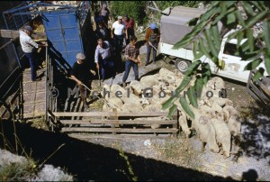 Guillaumes foire aux tardons, 1989