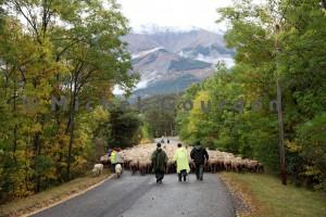 sur la route de Barcelonnette, après Uvernet, avant l'arrivée au parc de tri (2013)