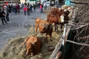 Guillestre, les vaches sont aussi présentes (2014)